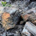 Các Đặc điểm & công dụng của nhóm gỗ hóa thạch bạn nên biết